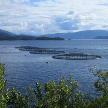 Four circular fish farm cages on a calm stretch of water, seen through trees.